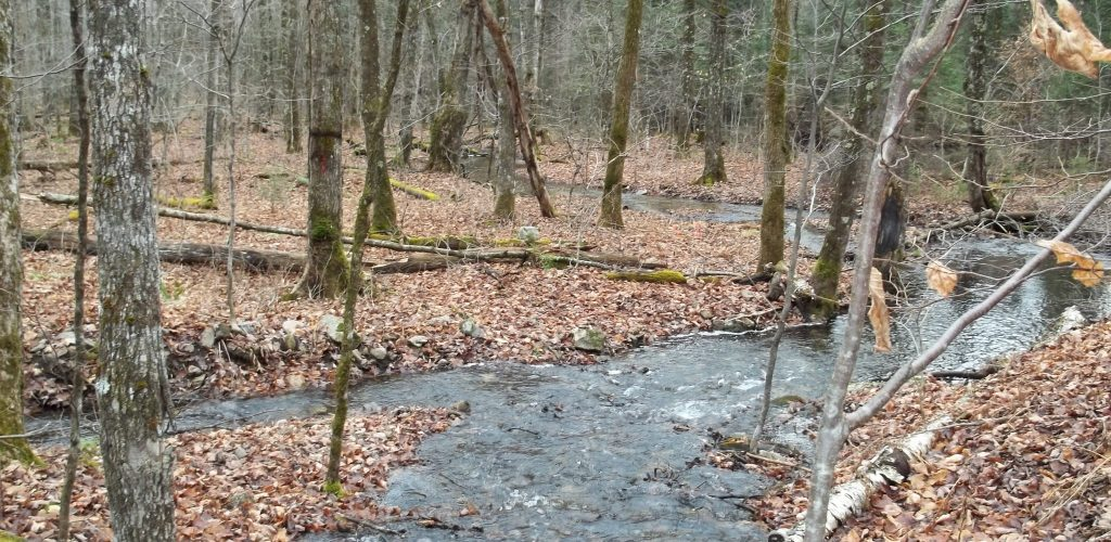 ruisseau_automne